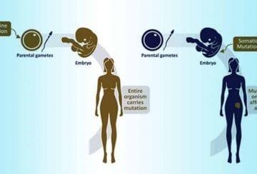 Germline vs Somatic BRCA