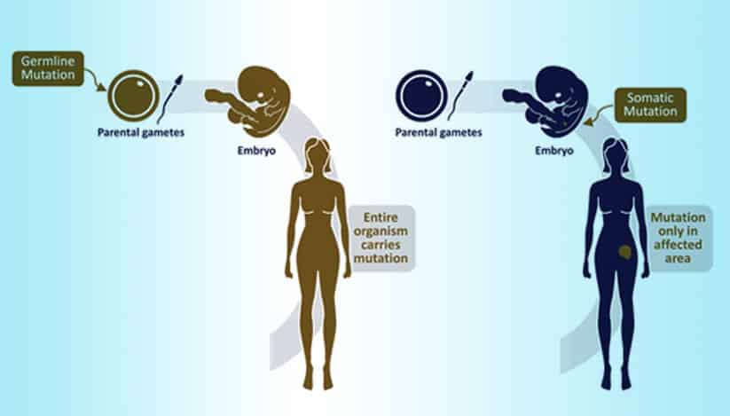 Germline vs Somatic BRCA